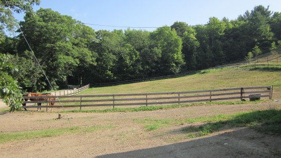 One of the paddocks